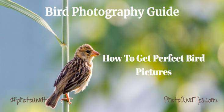 Bird Photography Guide_How to Get Perfect Bird Pictures_photoandtips.com #photoandtips