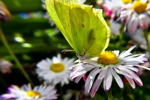 motyle-w-obiektywie