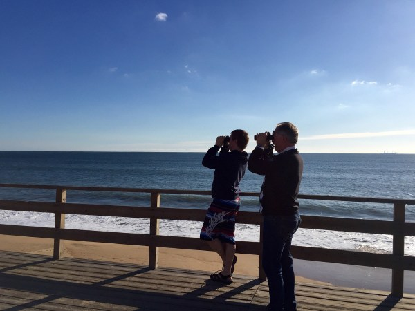 Searching for Audouin's Gulls between Mazagón and Matalascañas.