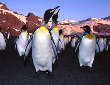 A colony of penguins in Antarctica.