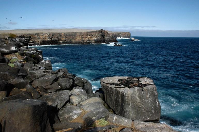 Bill-Abbott--060713b-0120-marine-iguanas