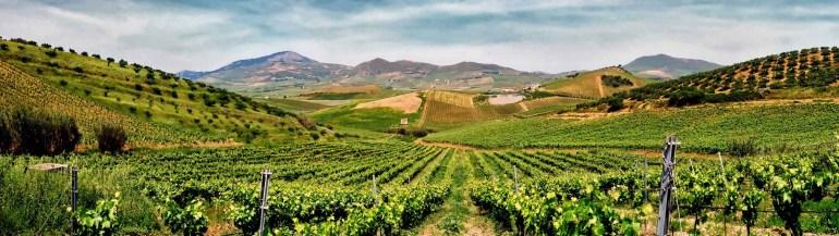 Larry-Arsenault-Pano-Vineyards-Sicily-sm-web