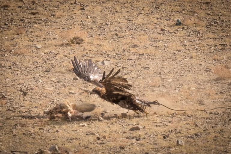 Wild-Mongolia-Golden-Eagle-Festival-Jacques-Lagarde-paxok-P9020161-small
