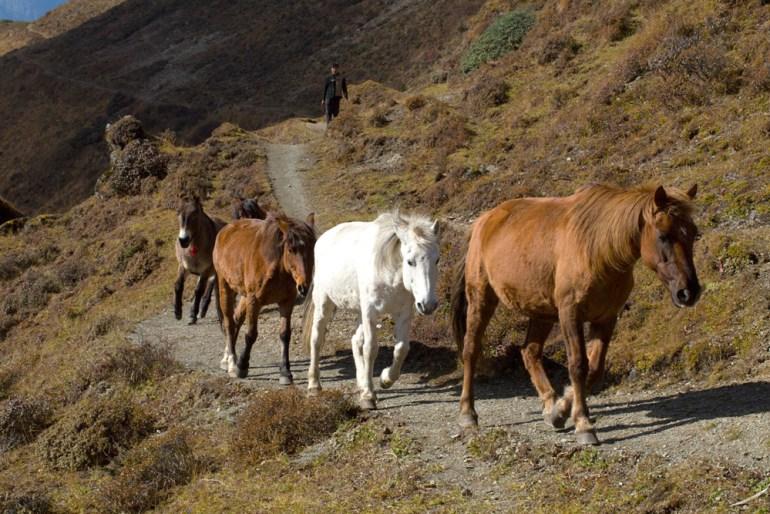Bhutan-Chomolhari-Trek-Yury-Krylov-12-saadj