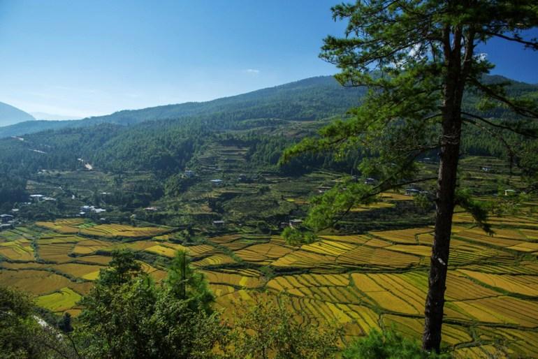 Bhutan-Chomolhari-Trek-Yury-Krylov-31-saadj
