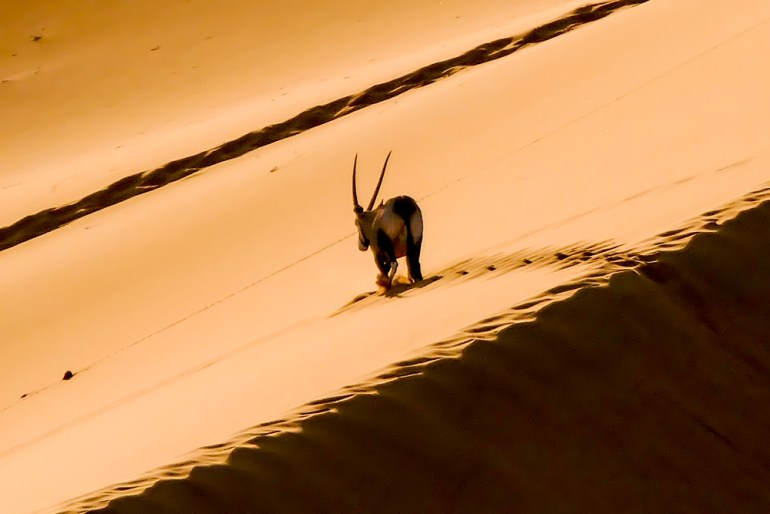 Oryx-Dune-and-Shadow---Sossusvlei-1