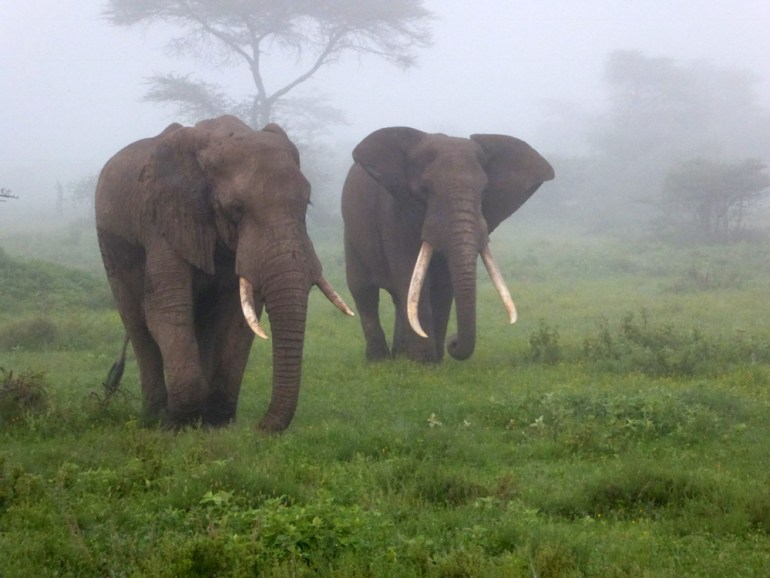 elephants on the Serengeti