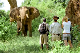 Elephant and safari goers in Zambia