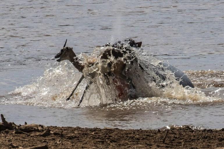 masai-mara-pax-john-sommerer-river-takedown-cradj-1000