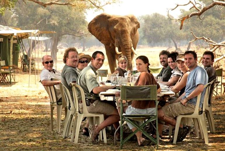 Safari Picnic with Elephant