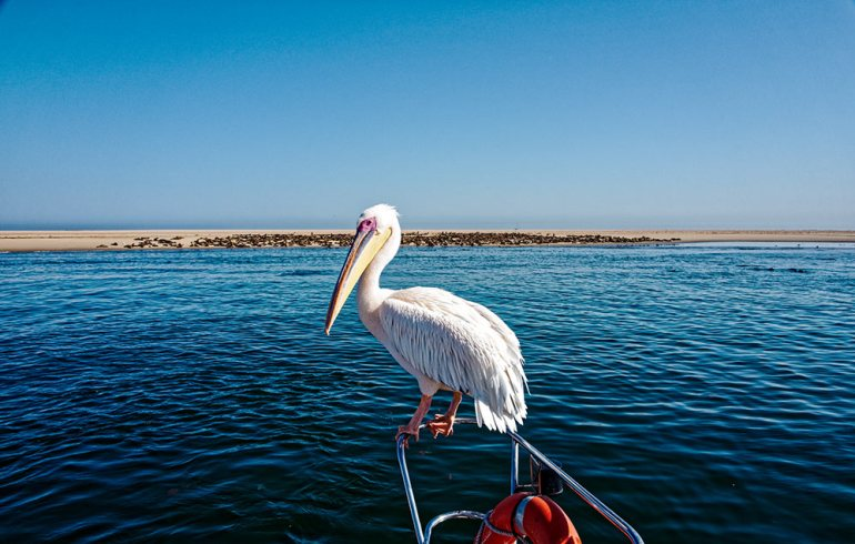 Pelican Point Namibia