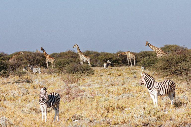 Wildlife, Etosha, Namibia
