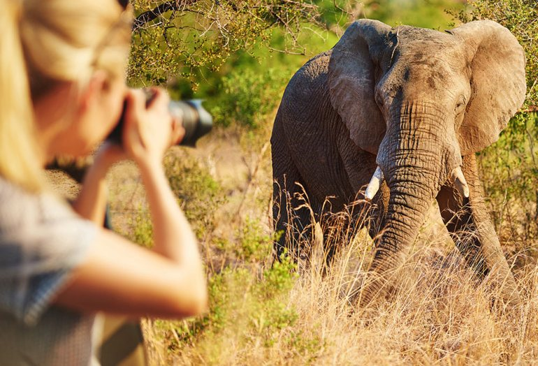 woman taking a photograph of an elephant while on safari in africa