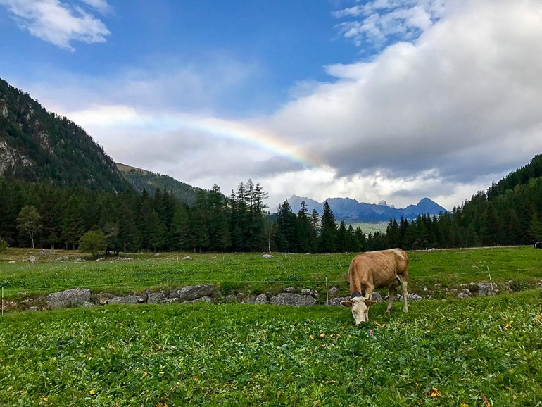 a cow in a meadow with a rainbow in the background
