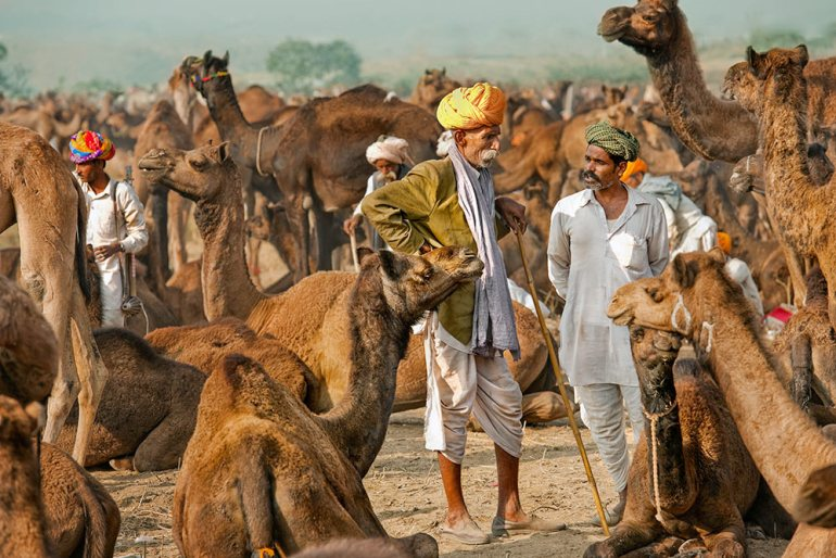 pushkar festival in india