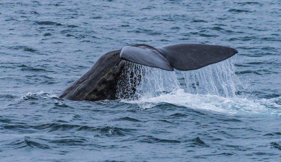 Whale fluke in Baja