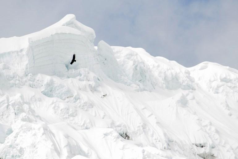 Andean condor and glacier in Cordillera Blanca