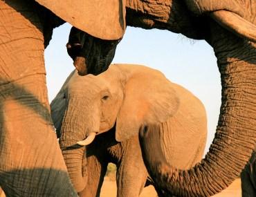 elephants-from-Jozi-blind-Zimbabwe