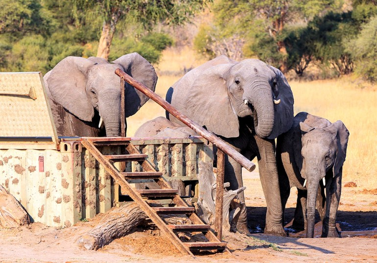 elephants waiting by the water hole in Zimbabwe