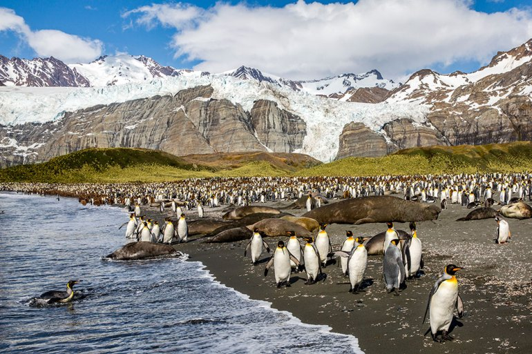 south georgia island antarctica