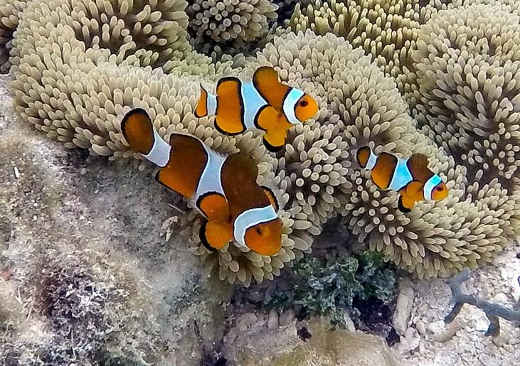 Underwater Adventures in Raja Ampat