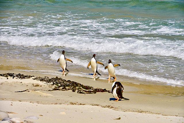penguins in beach in Antarctica