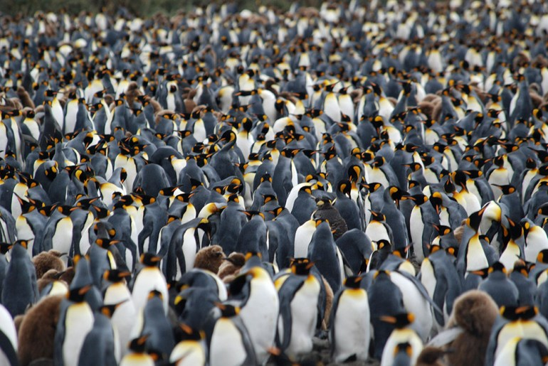 Amazing Wildlife in Antarctica