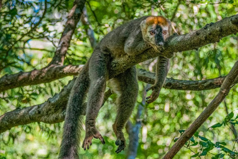 In Search of Madagascar's Unique Wildlife