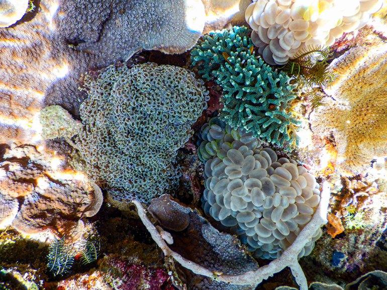 coral reef in Raja Ampat