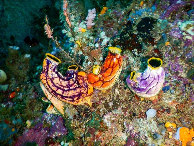 uniquie coral wildlife in Raja Ampat