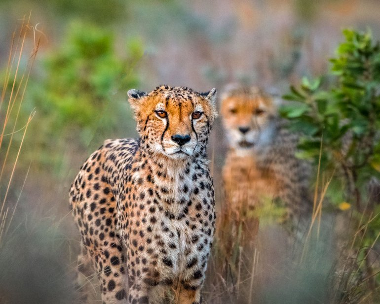 cheetah in southern africa, best place to travel in september