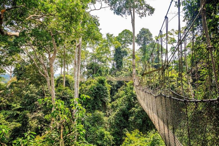 kakum national park in ghana