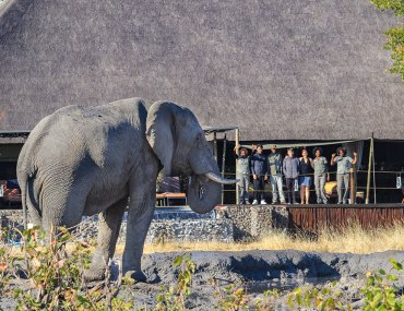 elephant at lodge in zimbabwe