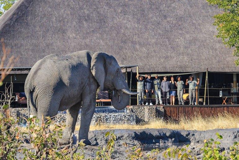 Following the Great Elephant Migration from Botswana to Zimbabwe