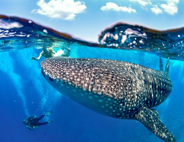 snorkeling experience in cenderawasih bay
