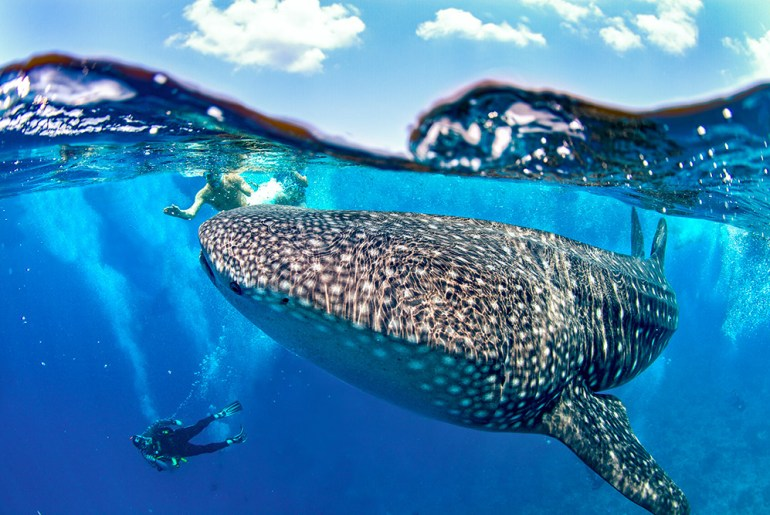 Incredible Underwater Experiences in the Pacific