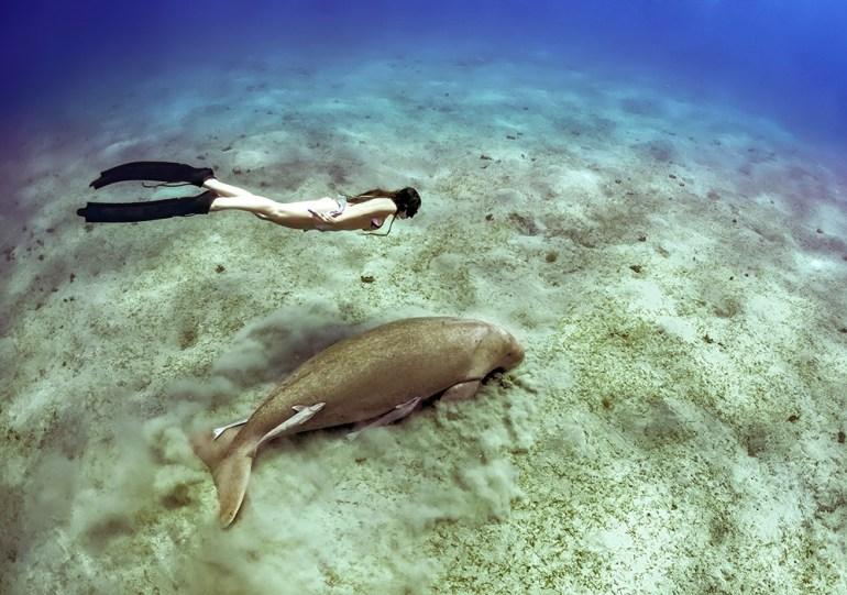 snorkeling experience in vanuatu