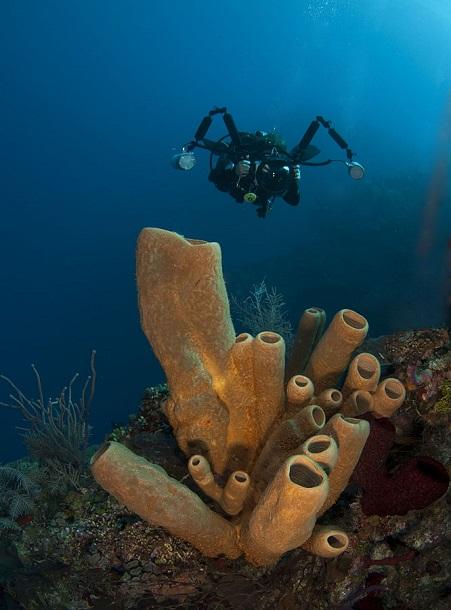 Underwater strobes