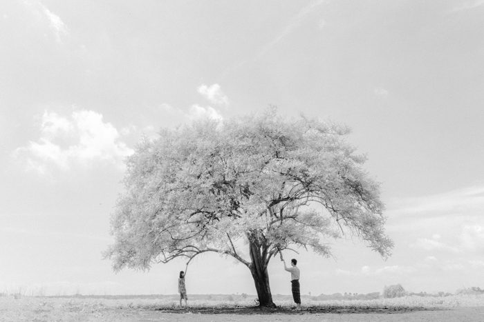 black and white wedding with large tree