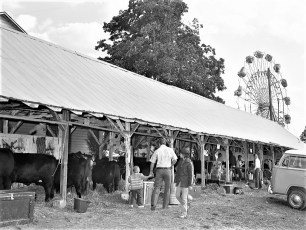 4H at the Col. Cty. Fair 1972 (1)