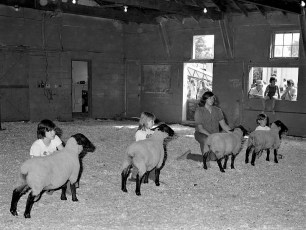 Col. Cty. 4H Sheep Show 1975 (2)