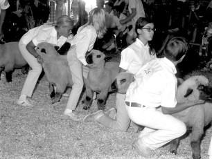 Dutchess County Fair 1968 (15)