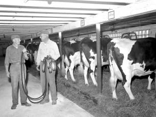 Grant Langdon Dairy Farm Copake 1963 (5)