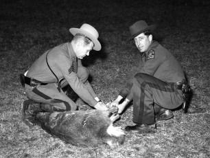 NYS Trooper Sgt. F. Hilfrank & Encon Officer with injured deer 1953 (1)