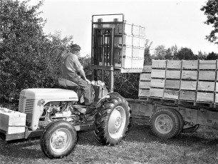 George Saulpaugh Farm loading apples Clermont 1954