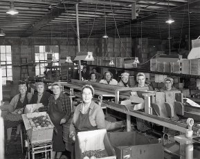 Cold Storage Employees 1947