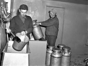 Kukon Dairy Farm G'town 1953 (3)