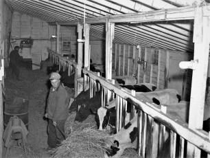 Kukon Dairy Farm G'town 1953 (5)