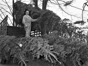 Ben Bartolotta Xmas Trees 1953