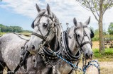 Steam Thresher Reunion - A Labor Day Tradition